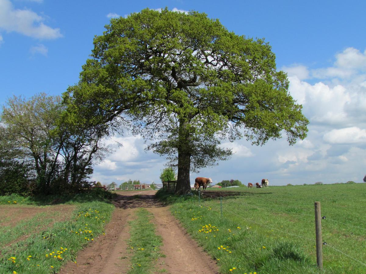 Tree in an organic field