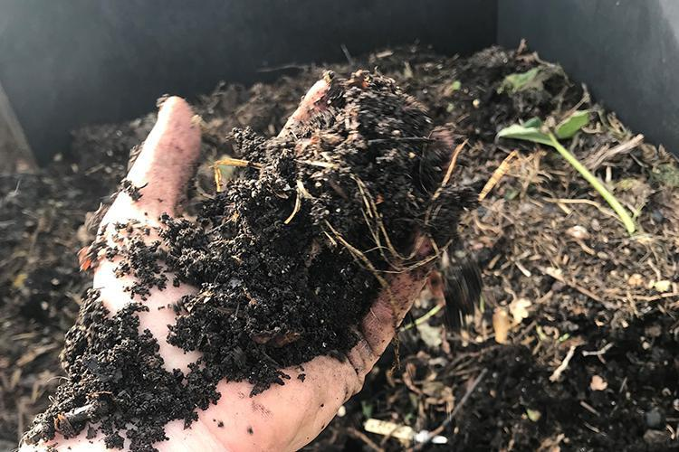 Organic gardening: making compost at home