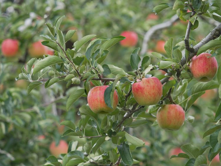 Pesticide use in organic farming