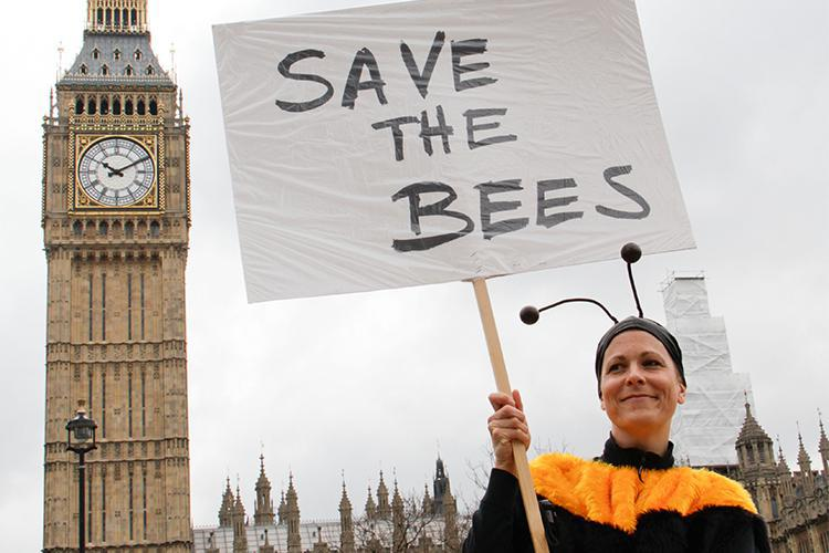 Give bees a chance – three ways to help nature-friendly farming
