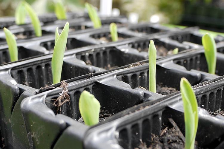 3 easy organic veggies to grow in September